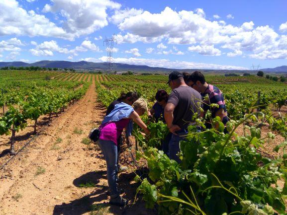 Gran éxito de participación en el curso de peritación de uva de vino